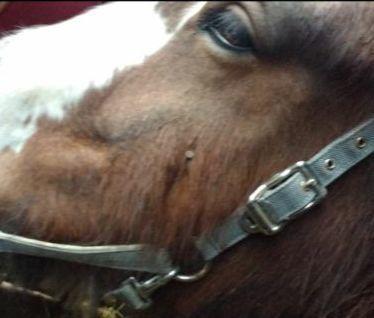 APPEAL: The horse found with the nail in its face