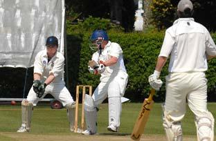 Somerset Shrubbery cricket league round up