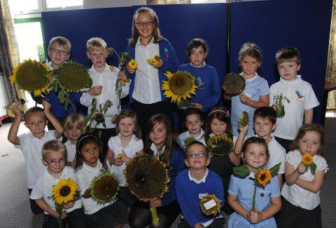 Sunflower prizes at Kingsmoor