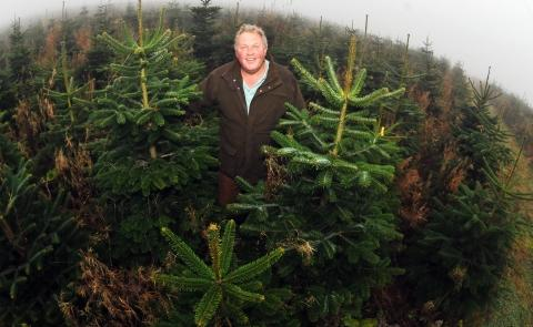 John Hardwick, chairman of the British Christmas Tree Growers Association, believes nothing beats a real tree.