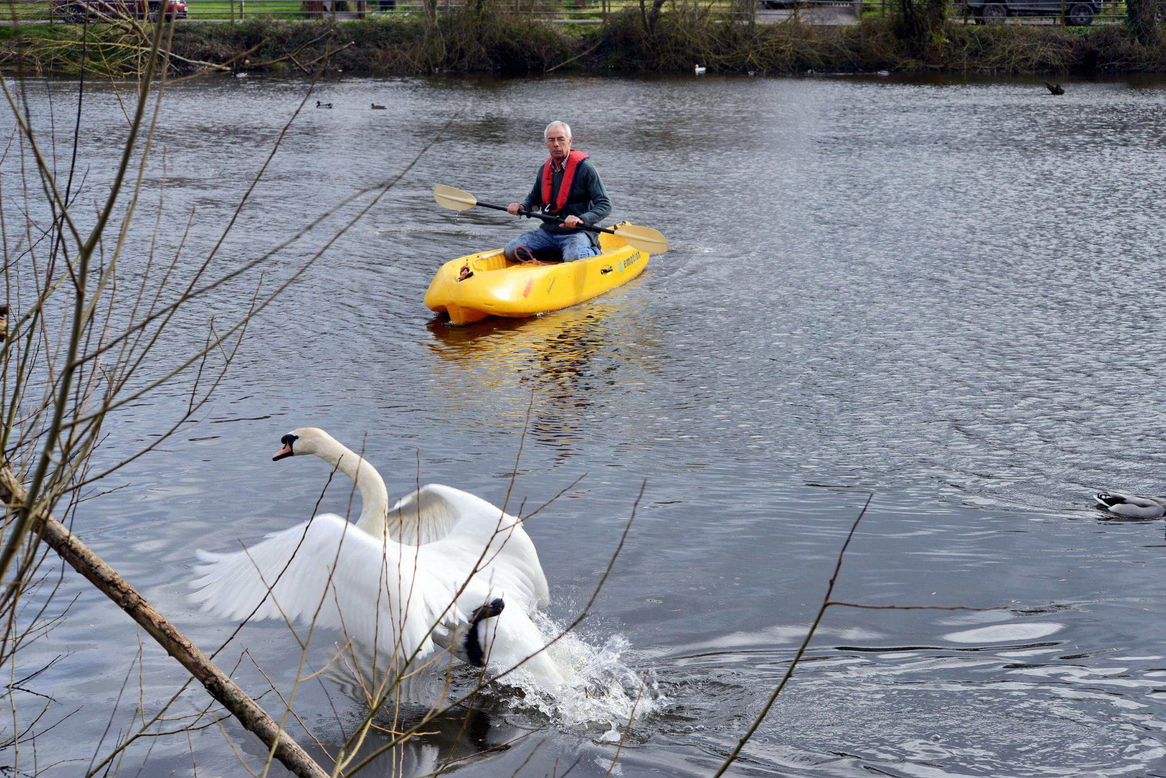 Roger Lucken from Secret World tries, and fails, to save the injured swan