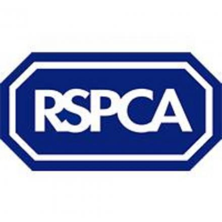 RSPCA bids to find homes for horses