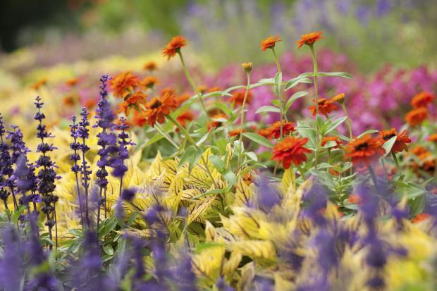 COMING UP: A 'heritage' summer plant sale at Brent Knoll