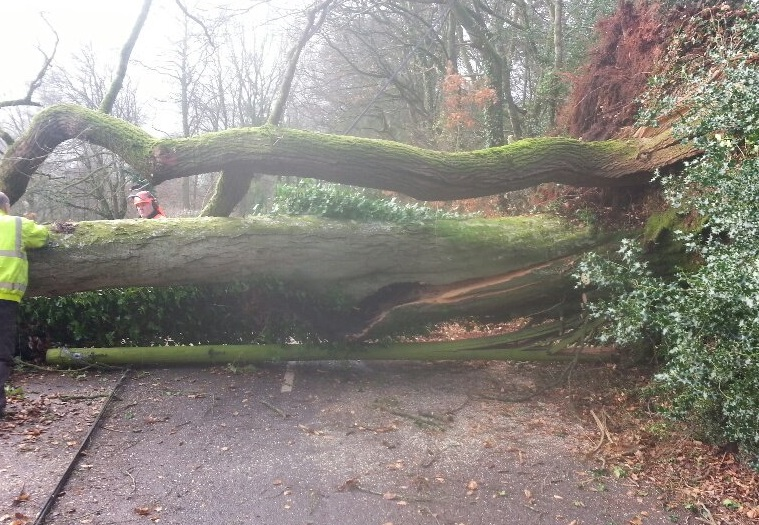 FALLEN: Trees have been falling down across the county in the strong winds (Stock photo)