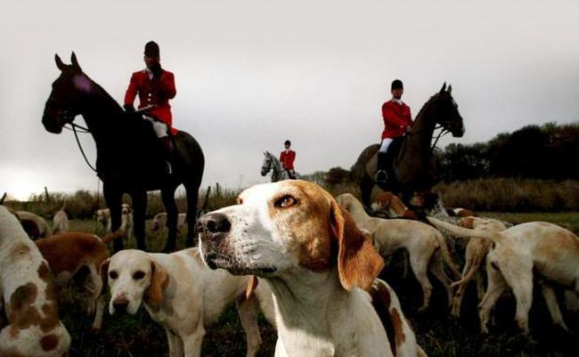 DIVISIVE: Foxhunting has been put back on the agenda