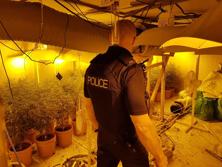 CANNABIS FARM: The drugs are believed to be worth £65,000