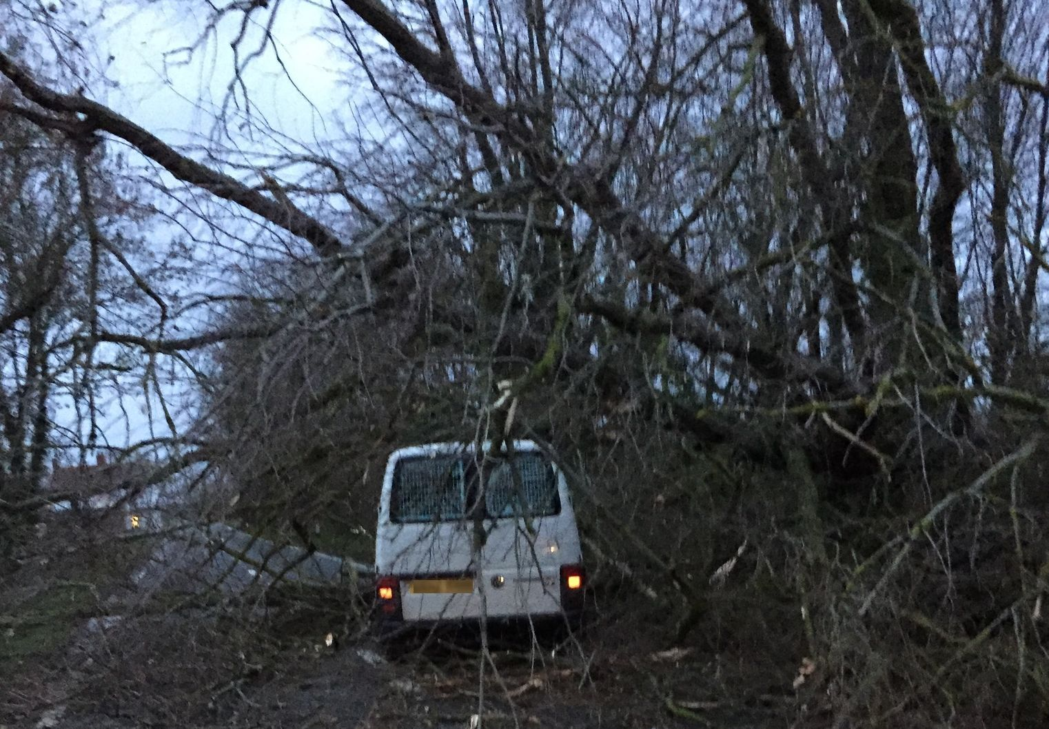 COLLAPSE: Van driver Les Trunks suffered a shock as a tree fell on his van during strong winds last week